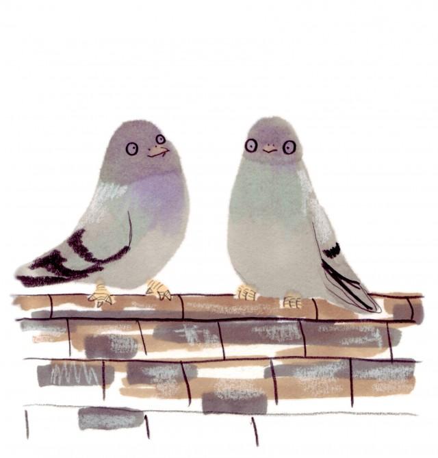 jo clark pidgeons drawing