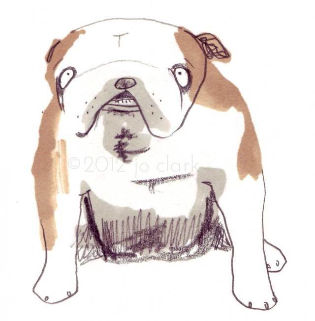 british bulldog drawing