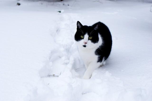 cat in the snow jo clark