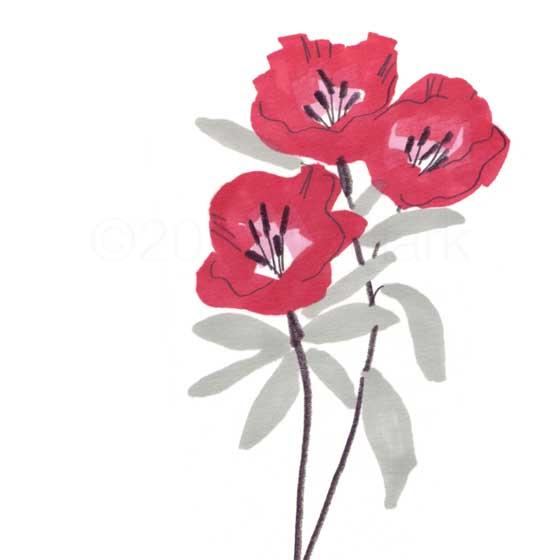 vivid red flower plant