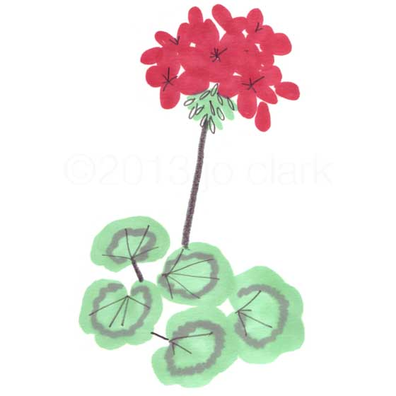 red geranium plant illustration
