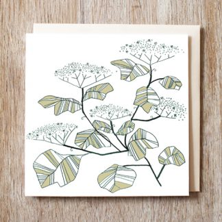 Elderflower Card
