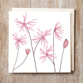 Ragged Robin card