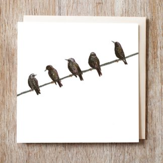 Starlings Card