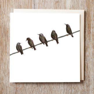 Starlings Card