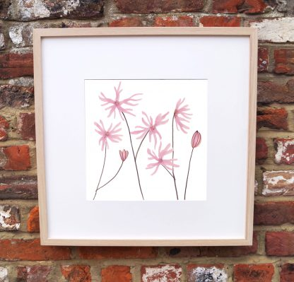 Ragged Robin Art Print