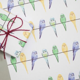 budgies illustrated gift wrap