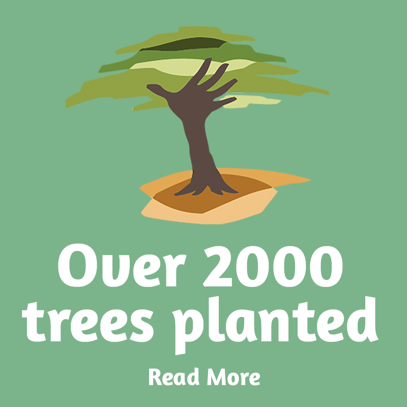 over 2000 trees planted with Eden reforestation projects